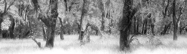 bouverie preserve oaks - infrared